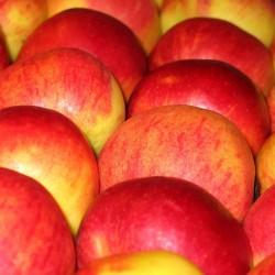 Pommes Crimson Crisp