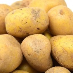 Pommes de terre chair tendre