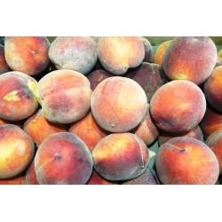 Panier de fruits bio et locaux